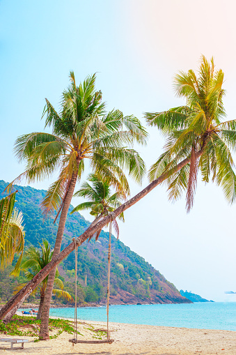 Tropical vertical seascape. The swing is suspended by ropes from a palm tree on a sandy sea shore on a sunny day. Travel and tourism.