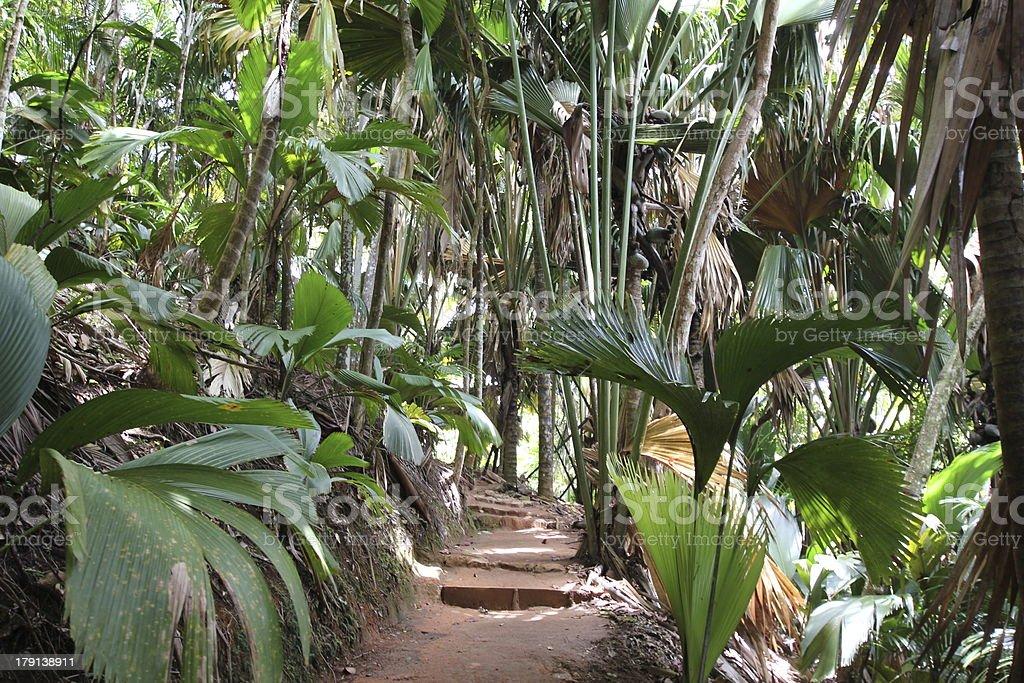 Carta Da Parati Foresta Tropicale : Foresta tropicale vergine vallée de mai isola di praslin seychelles