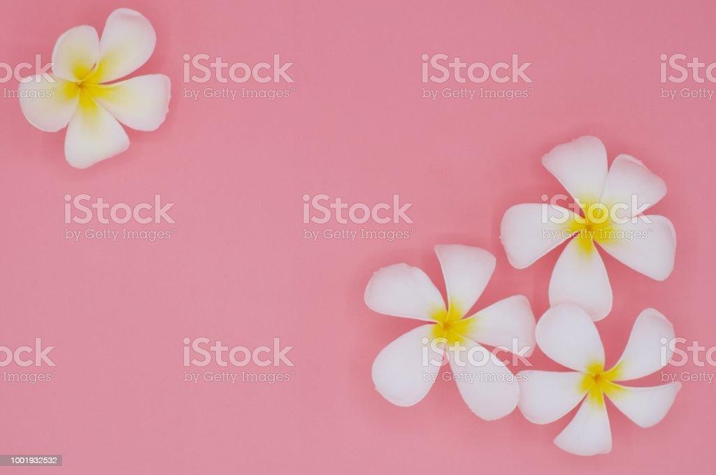 Fleurs De Frangipanier Ou Plumeria Tropical De Couleur Blanche