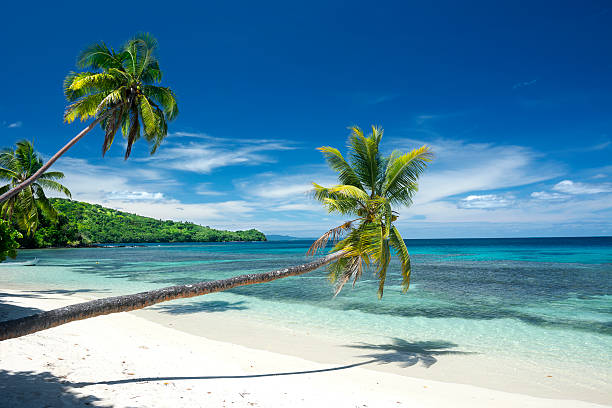 tropical white sand beach - fiji stock photos and pictures