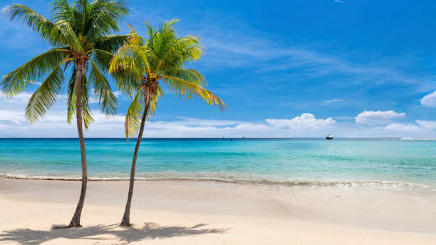 Tropical white sand beach with coco palms stock photo