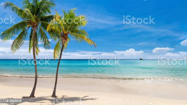 Photo of Tropical white sand beach with coco palms