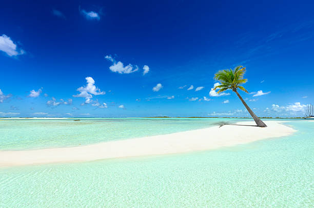Tropical white sand cay beach with lonely coconut palm tree stock photo