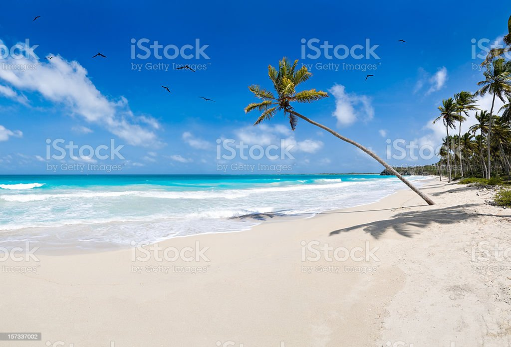 Tropical white sand virgin beach - Huge Image royalty-free stock photo