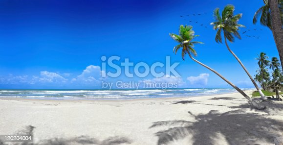 Paradisaical tropical white sand beach with coconut trees and tropical birds in flight. Trop[ical themes. Relaxing, travel and leisure related images for vacations in the Caribbean. Image taken at Morrocoy National Park, Venezuela. Morrocoy is a coastline and a group of small islands and cays located at Falcon State in Venezuela. A very popular destination for leisure, diving, kite surfing and all kind of water activities. Morrocoy and the beauty of the turquoise coastal beaches of Venezuela are almost indistinguishable from those of the Bahamas, Fiji, Bora Bora, French Polynesia, Malau, Hawaii, Cancun, Costa Rica, Florida, Maldives, Cuba, Puerto Rico, Honduras, or other tropical areas.  [b]Other Images:[/b]  [b]My similar Vetta Images[/b]  SIZE: 11.000 x 5616 pixels[/blue] [url=http://www.istockphoto.com/stock-photo-10518116-tropical-white-sand-virgin-beach.php][img]http://www.albertopomares.com/thumbs/palm_big.jpg[/img][/url]  SIZE: 15.422 x 5616 pixels [url=http://www.istockphoto.com/stock-photo-11516738-tropical-white-sand-virgin-beach.php][img]http://www.albertopomares.com/thumbs/palm_bigbig.jpg[/img][/url]   [url=http://www.istockphoto.com/my_lightbox_contents.php?lightboxID=7869819] Lightbox of Tropical Islands and Cays[/url]  [url=http://www.istockphoto.com/my_lightbox_contents.php?lightboxID=7869819][img]http://www.albertopomares.com/thumbs/cays.jpg[/img][/url]   [url=http://www.istockphoto.com/my_lightbox_contents.php?lightboxID=6074811]Lightbox of Tropical Beaches[/url]  [url=http://www.istockphoto.com/my_lightbox_contents.php?lightboxID=6074811][img]http://www.albertopomares.com/thumbs/beaches.jpg[/img][/url]