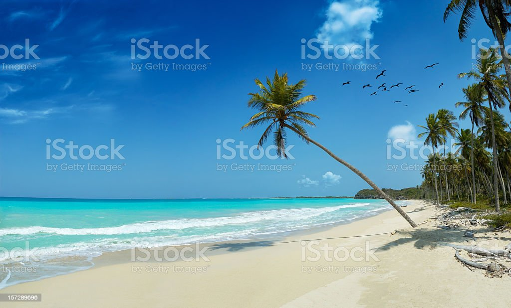 Tropical white sand virgin beach stock photo