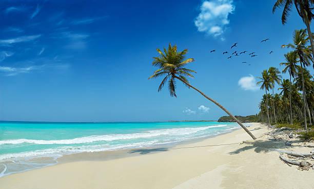 spiaggia di sabbia bianca tropicale vergine - bahamas foto e immagini stock