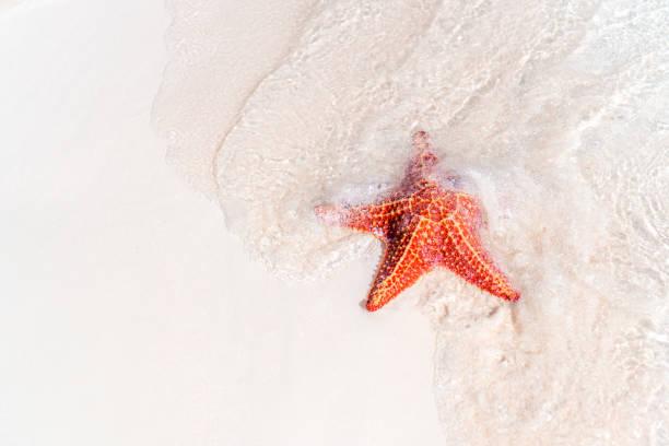Tropischer weißer Sand mit roten Seesternen im klaren Wasser – Foto