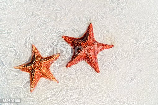 istock Tropical white sand with red starfishes 885625466