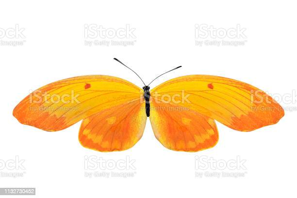 Tropical yellow butterfly isolated on white background picture id1132730452?b=1&k=6&m=1132730452&s=612x612&h=zlwvnosmrqxnimjsonr6f3ks3il2v06ou jzjmjge6a=