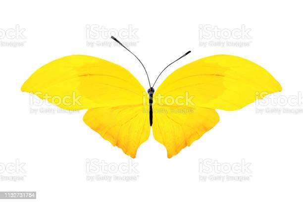 Tropical yellow butterfly isolated on white background picture id1132731754?b=1&k=6&m=1132731754&s=612x612&h=xnfr x17mjvghjb8ks1y2qy7tree3p0vvyu4jnt6yci=
