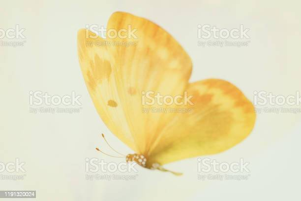Tropical yellow butterfly isolated on white picture id1191320024?b=1&k=6&m=1191320024&s=612x612&h=dtgb 9xitmklmpkudqk0lcv 71aejvx7yt8ta42 uqw=