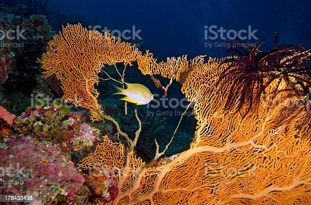 Tropical yellow fish swimming through a sea fan hole picture id178433433?b=1&k=6&m=178433433&s=612x612&h=tnb7sd34u vxrlkcmevrm4w77xazb6gjc3aw9t wng8=