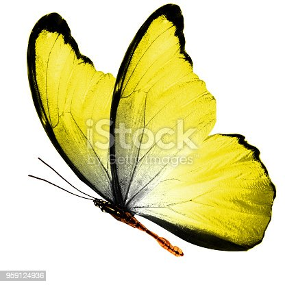 999676880 istock photo tropical yellow flying butterfly isolated on white background 959124936