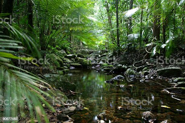 Photo of Tropical_Rain_Forest