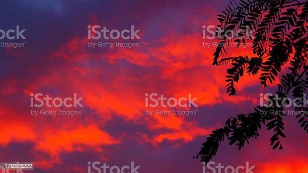Photo of Tropical-esque Leaf Silhoutte & Glowing Neon Orange Clouds