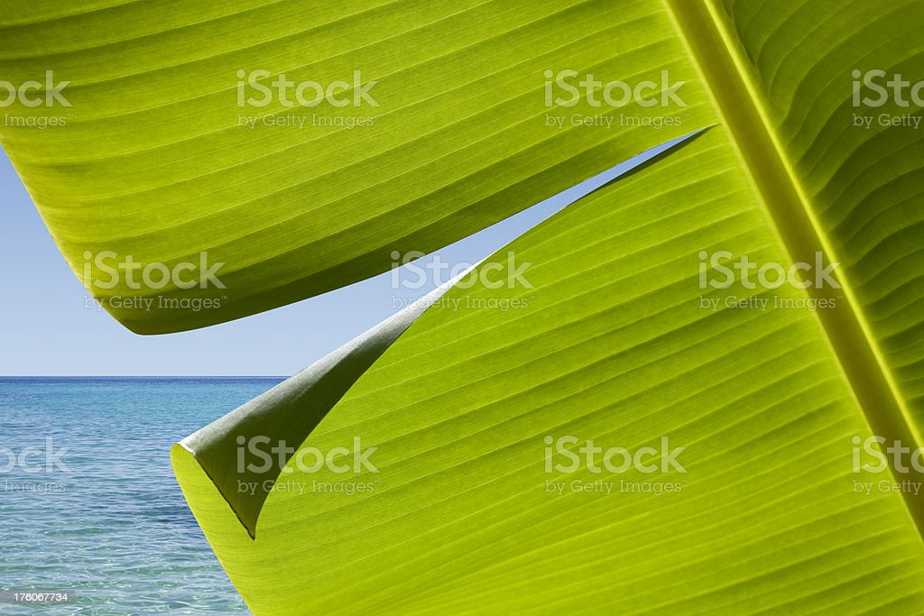 Tropics royalty-free stock photo