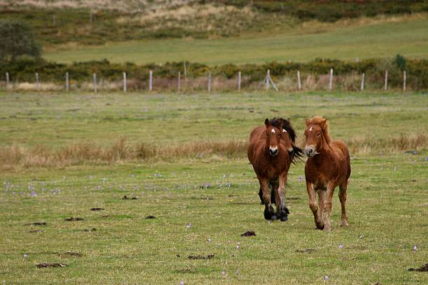 trotting horses - bioremediation stock photos and pictures