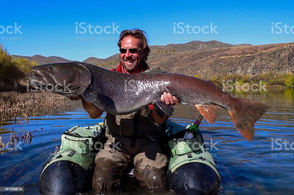 Trout action - Large one with 57 lbs stock photo