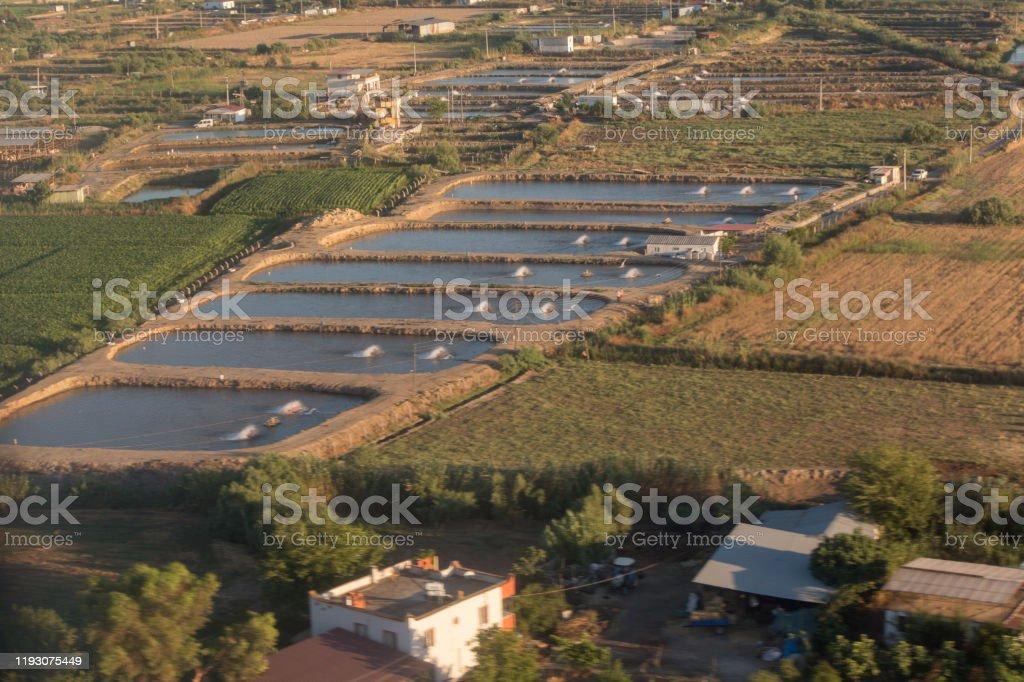 milas badrum muğla türkiye counrtyside alabalık balık çiftliği - Royalty-free Alabalık Stok görsel