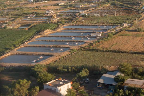 milas badrum muğla türkiye counrtyside alabalık balık çiftliği stok fotoğrafı