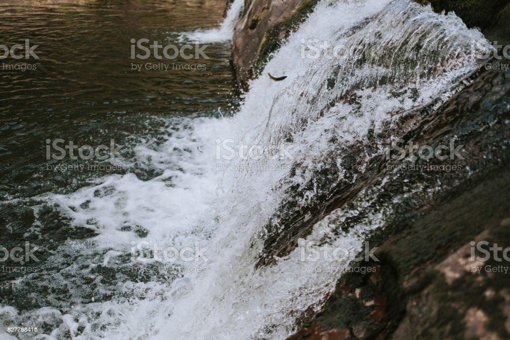 Forelle in der Strom von Wasser – Foto