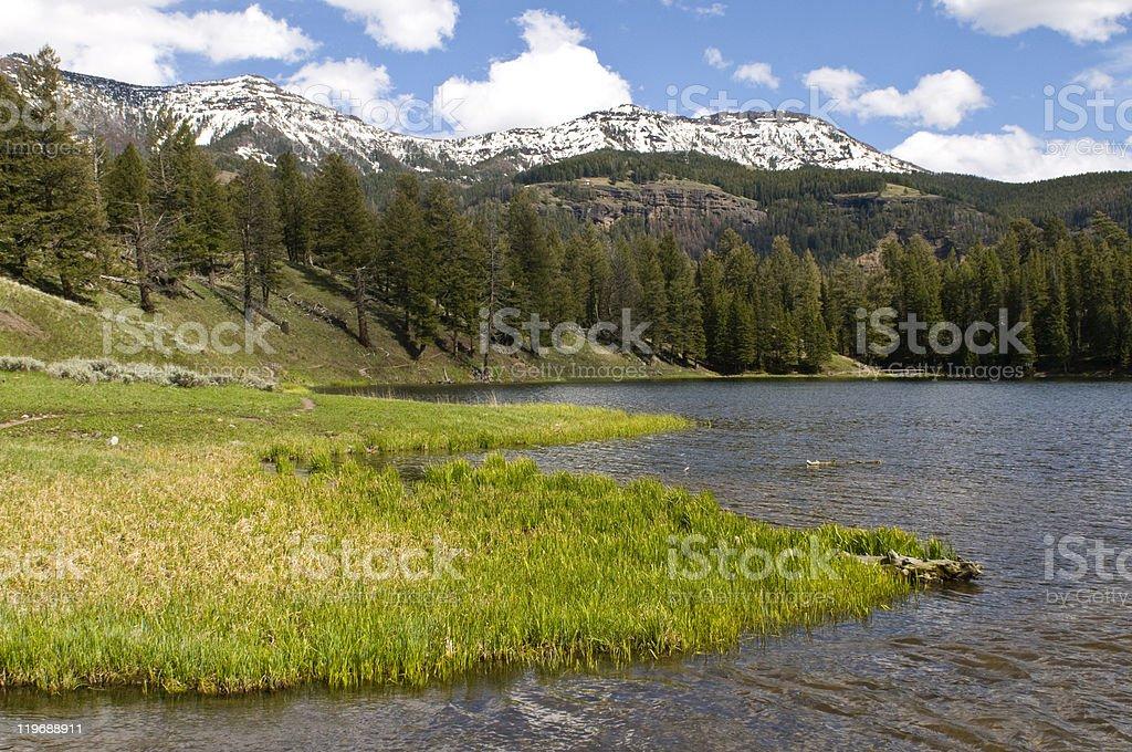 Trout Lake, Yellowstone royalty-free stock photo