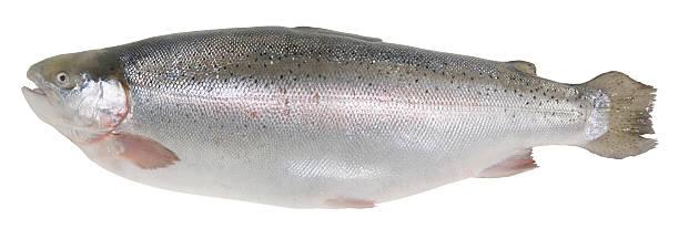 Trout Forelle – Foto