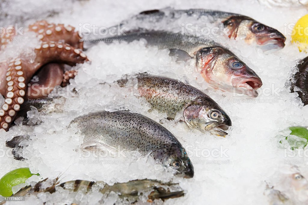 Trout, seabass and other seafood on market display royalty-free stock photo