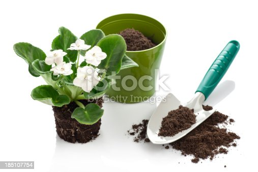 Trowel is ready to plant a violet flower in a green flowerpot. See some gardering images like this below: