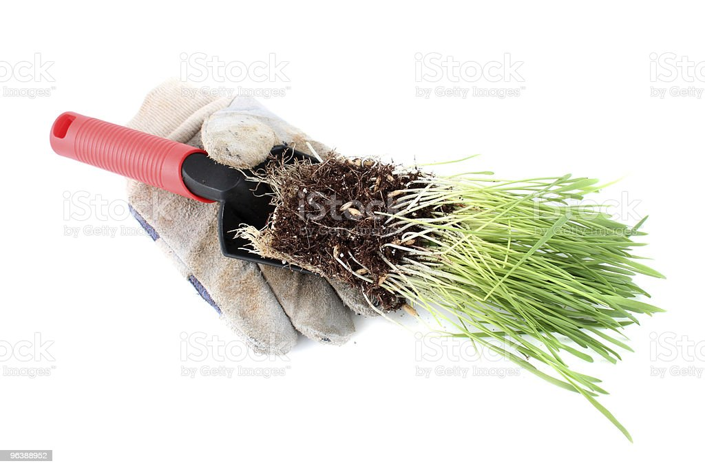 Trowel and grass - Royalty-free Botany Stock Photo