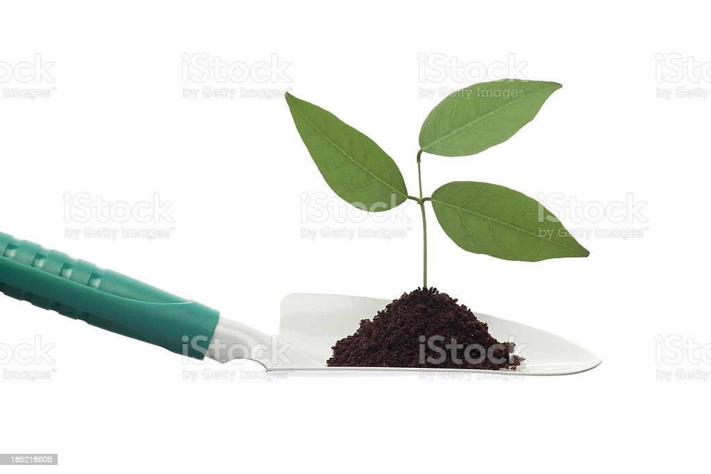 Trowel and young plant royalty-free stock photo