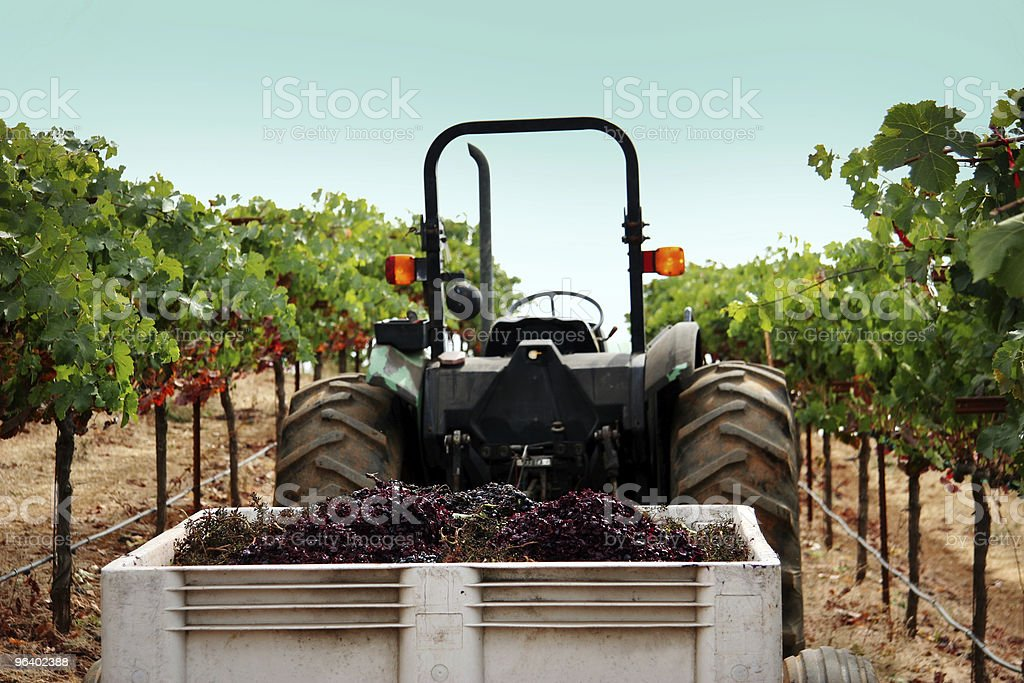 Truck at a vineyard - Royalty-free Agriculture Stock Photo