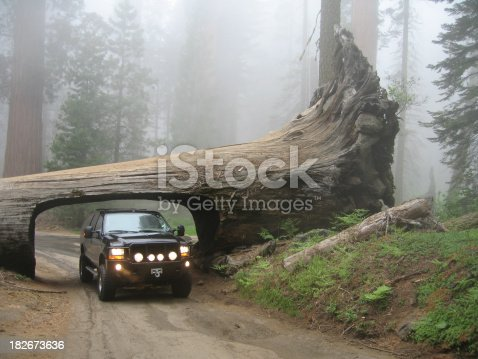 a big truck driving through a bigger tree in Sequoia National Park