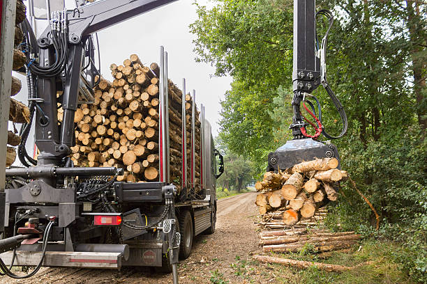 truck lifting tree trunks with grabber on trailer - logging equipment stock photos and pictures