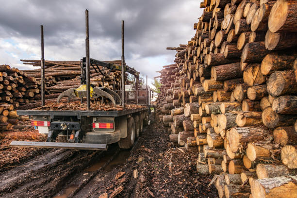 truck loading wood in an outdoor pine wood warehouse - industria forestale foto e immagini stock