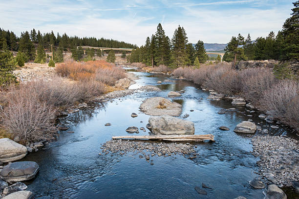 truckee river - dally stock pictures, royalty-free photos & images