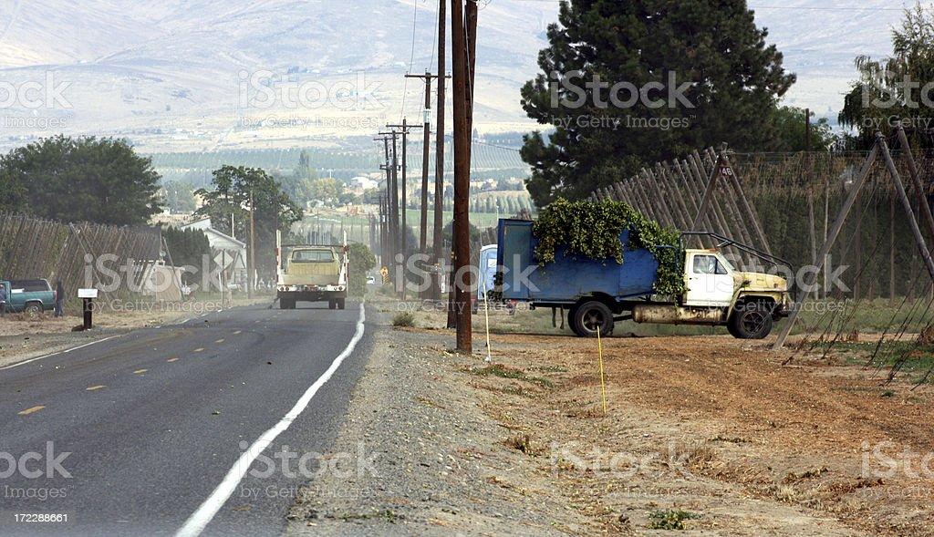 Trucks full of hops leaving Farm royalty-free stock photo