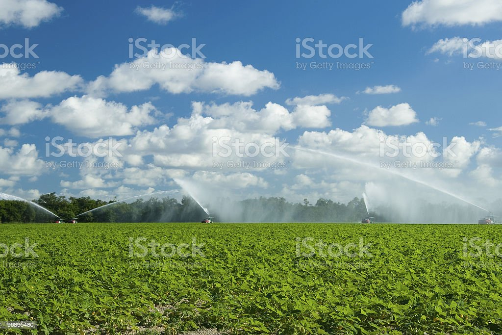 Trucks irrigating green field royalty-free stock photo