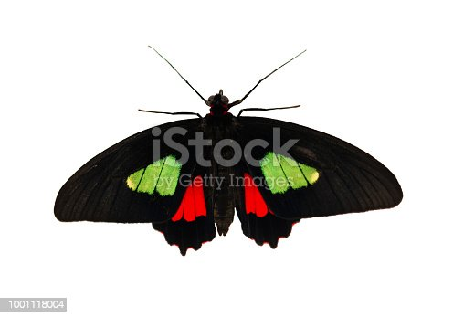 istock True cattleheart butterfly, Parides arcas, is isolated on white background 1001118004