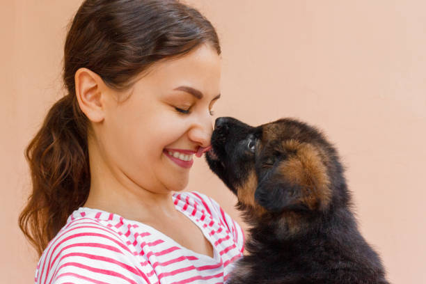 True friendship between girl and puppy who is giving a kiss True friendship between girl and puppy who is giving a kiss. licking stock pictures, royalty-free photos & images