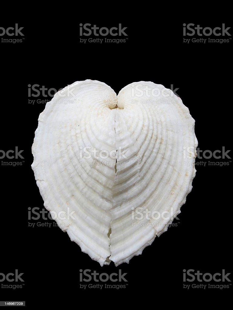 Verdadero corazón berberecho - foto de stock