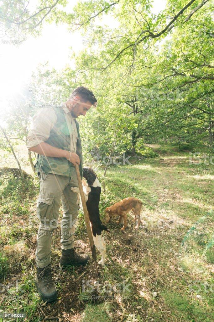 Truffle hunting in Italy stock photo