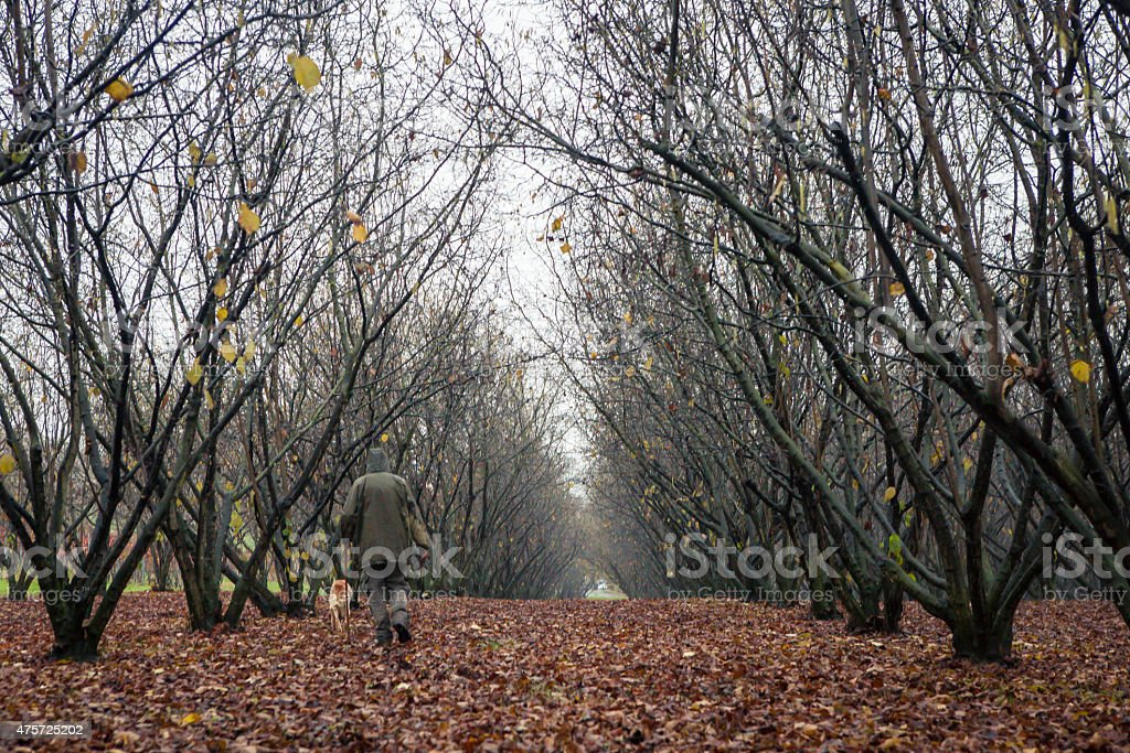 Truffle hunting stock photo
