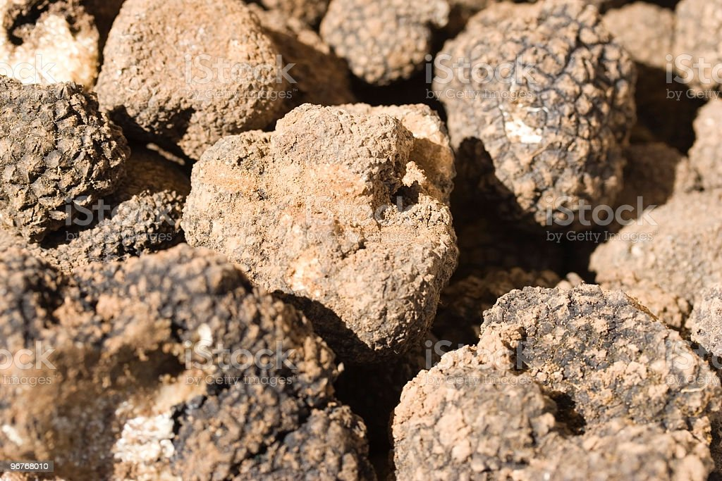Truffles For Sale At Market royalty-free stock photo