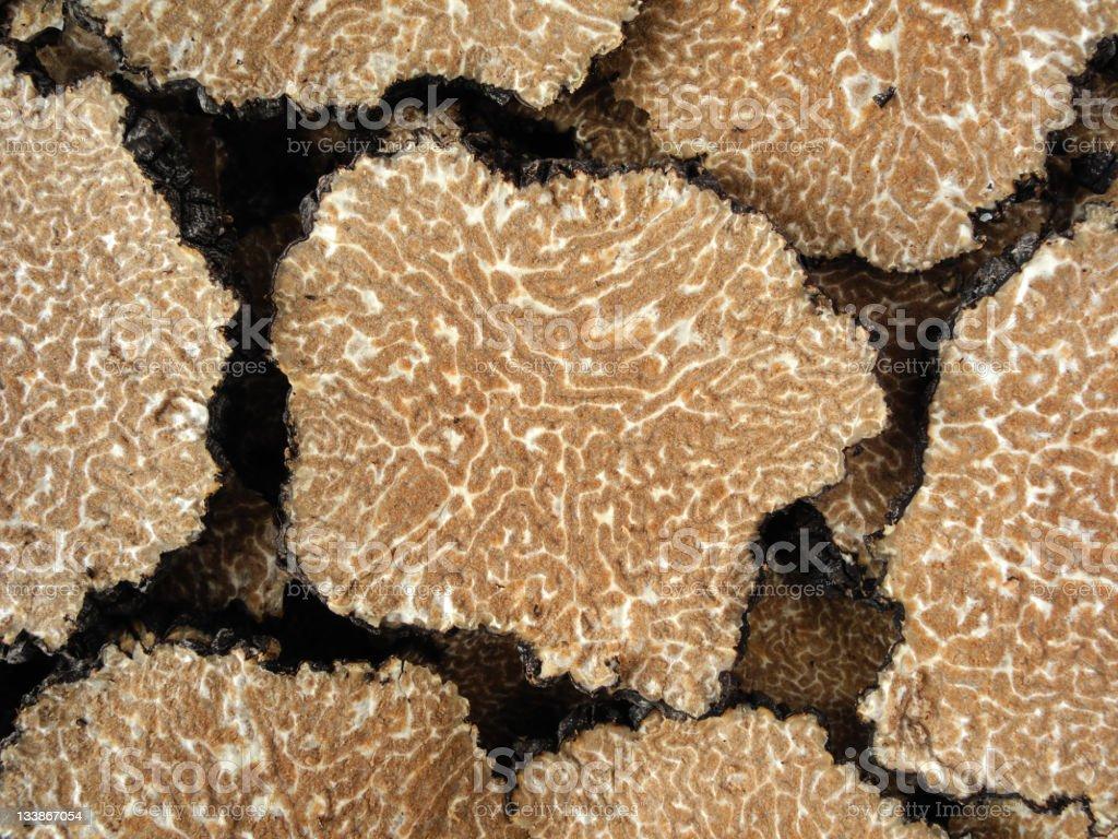 truffle's texture stock photo