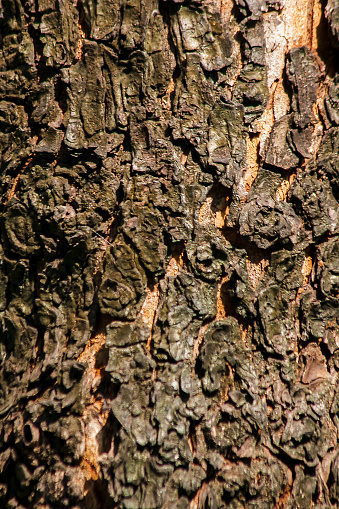 Trunk Bark Is Dry Rough Skin Wallpaper Stock Photo Download Image Now Istock