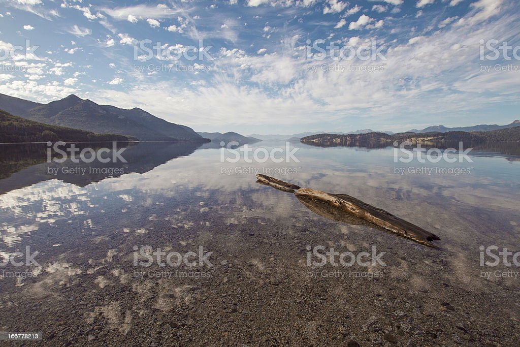 Trunk in a lake royalty-free stock photo