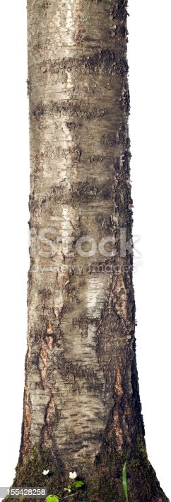 Trunk of a tree isolated on white.
