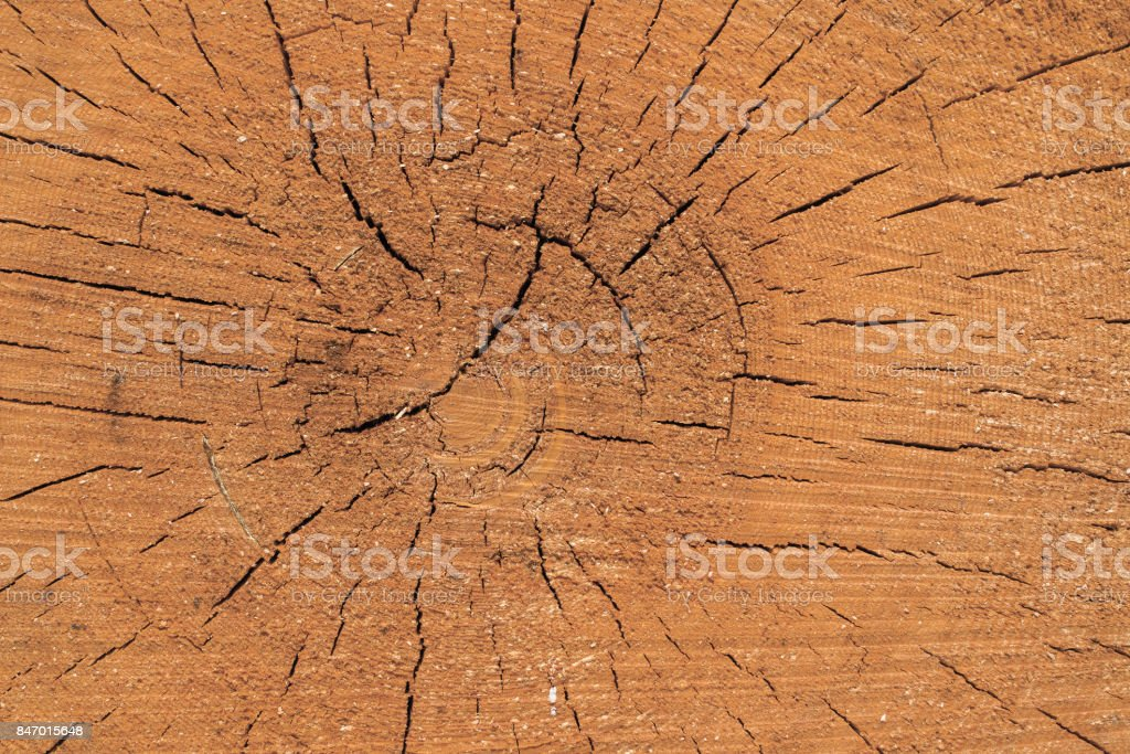 trunk of a tree is sawn crosswise stock photo